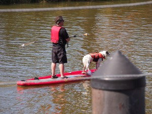 ...and of course a dog on a paddle board!